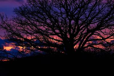 Photograph - February Sunset by Jeanette Fellows