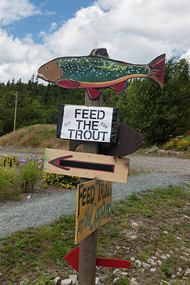 Photograph - Feed The Trout by Suzanne Gaff