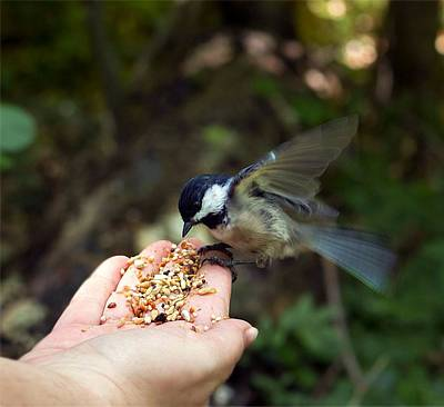 Photograph - Feeding Bird From My Hand by Lilia D