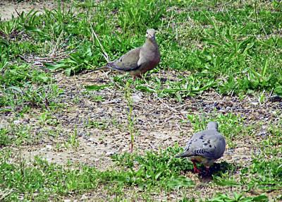 Animal Portraits - Feeding Doves by Don Baker