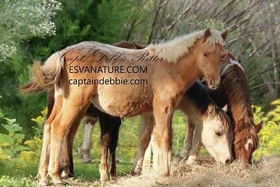 Photograph - Feeding Foals 2016 Art by Captain Debbie Ritter