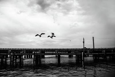 Feeding Gulls Art Print