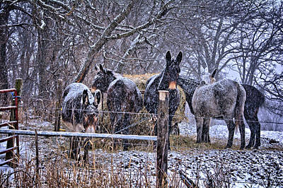 Photograph - Feeding In The Snow 2 by Bonfire Photography