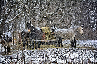 Photograph - Feeding In The Snow by Bonfire Photography