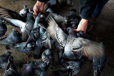 Photograph - Feeding by James David Phenicie