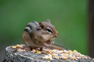 Photograph - Feeding On A Log Ready To Eat by Dan Friend