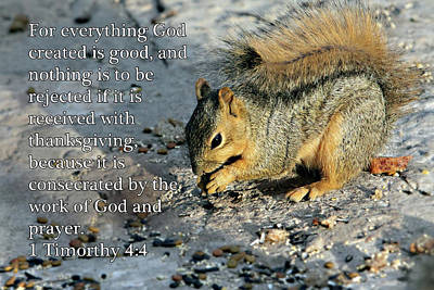 Feeding Squirrel 1timothy 4 V 4 Art Print by Linda Phelps