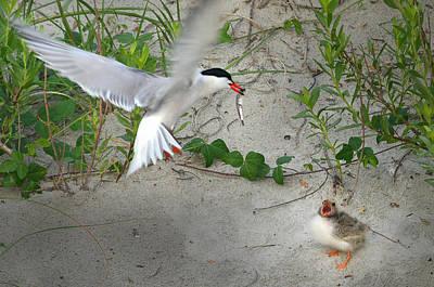 Photograph - Feeding Term by Dana Sohr