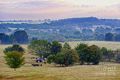 Photograph - Feeding The Cattle At Dawn by Catherine Sherman