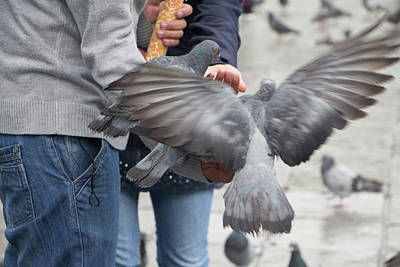 Photograph - Feeding The Pigeons by Venetia Featherstone-Witty