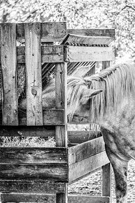 Photograph - Feeding Time At The Farm by Joni Eskridge