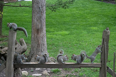 Feeding Time At The Fence Art Print