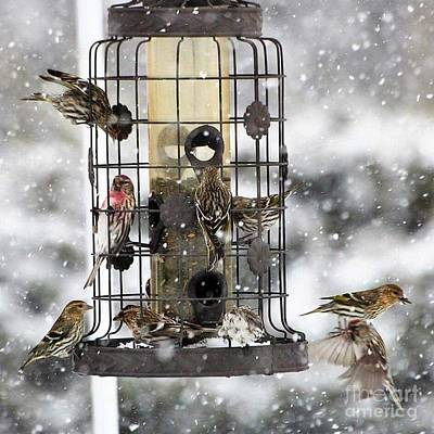 Photograph - Feeding Time In The Great White North by Marjorie Imbeau
