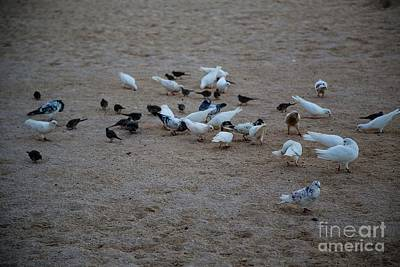 Photograph - Feeding Time by Jon Burch Photography