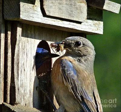 Photograph - Feeding Time by Julia Hassett