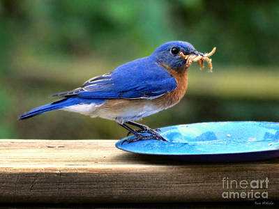 Photograph - Feeding Time by Sue Melvin