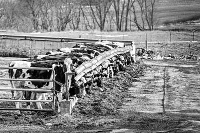 Feedlot Art Print