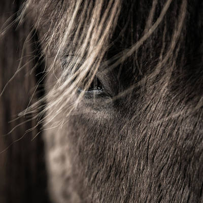 Iceland Horse Wall Art - Photograph - Feel My Breath II by Tim Booth