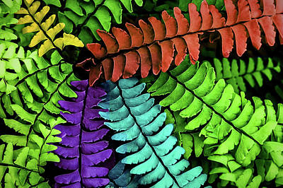 Wall Art - Digital Art - Feel The Fern by Jessica Manelis
