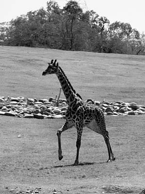Phoenix Zoo Photograph - Feelin' Frisky by Lorraine Baum