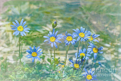 Photograph - Feeling Blue by Elaine Teague