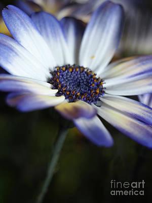 Feeling Blue In The Garden Shadows 2 Art Print by Dorothy Lee