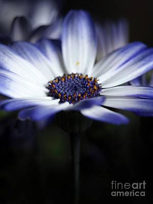 Feeling Blue In The Garden Shadows 3 Art Print by Dorothy Lee