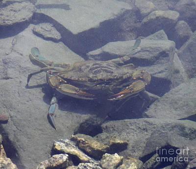 Photograph - Feeling Crabby by Cindy Lee Longhini