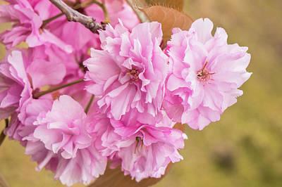 Photograph - Feeling Flowers by Crystal Hoeveler