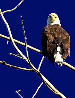 Eagle Photograph - Feeling Like Prey by Emily Stauring