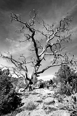 Photograph - Feeling The Sky by Glenn McCarthy Art and Photography