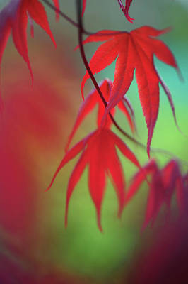 Maple Leaf Art Photograph - Feelings To You by Jenny Rainbow