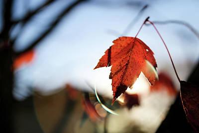 Photograph - Feels Like Fall by Lora Lee Chapman
