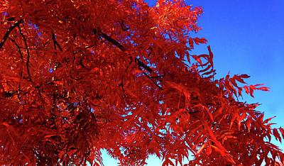 Photograph - Feiry 'olympic Flame' Sky Blue Sky by Robert J Sadler