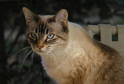 Photograph - Feline by Denise Mazzocco