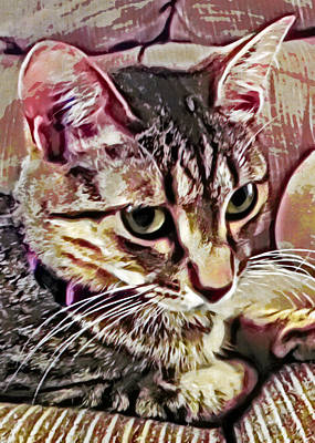Grettings Digital Art - Feline Fancy by David G Paul