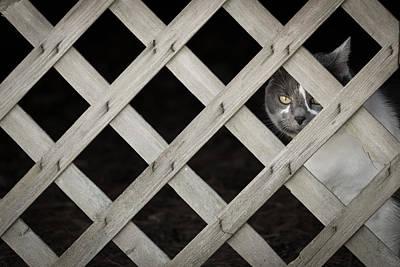 Feline Fence Art Print