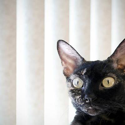 Devon Rex Cat Painting - Feline Fine by Glennis Siverson