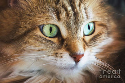 Digital Art - Feline Focused Intensity by Sharon McConnell
