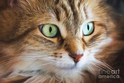 Digital Art - Feline Focused Intensity by Sharon McConnell