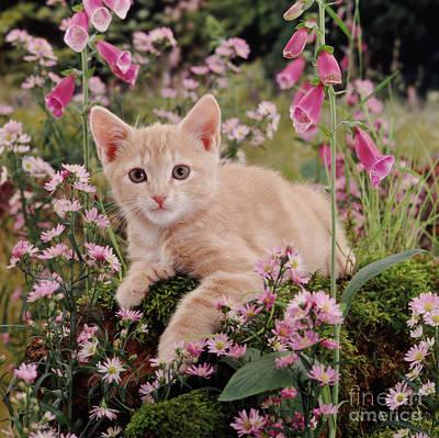 Photograph - Feline Foxgloves by Warren Photographic