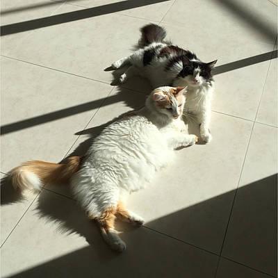 Photograph - Feline Friends by Karen Zuk Rosenblatt
