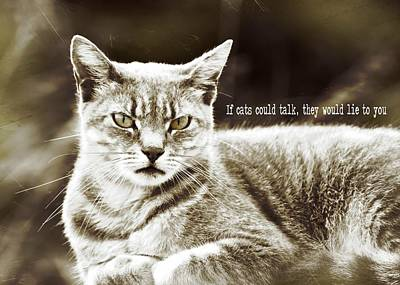 Feline Moment Quote Art Print by JAMART Photography