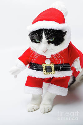 Photograph - Feline Santa Claus by Benny Marty