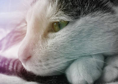 Photograph - Feline Zen by JAMART Photography