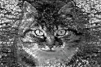 Photograph - Felix The Cat In Grey by Peggy Collins
