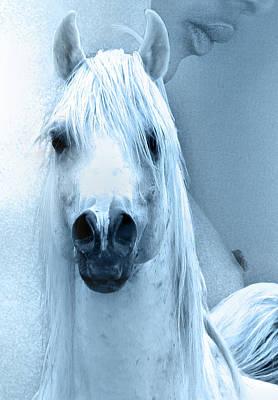 Act Photograph - Female And Arabians Stallion Ink by ELA-EquusArt