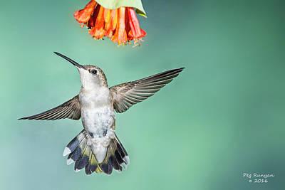 Photograph - Female Black-chinned Hummingbird by Peg Runyan