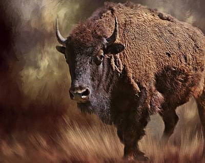 Photograph - Female Buffalo by Stephanie Calhoun