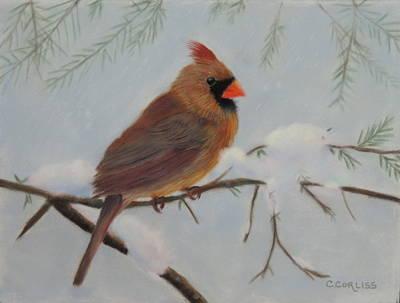 Pastel - Female Cardinal by Carol Corliss